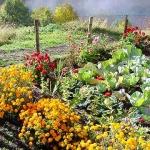 Un orto-giardino per uscire dal tunnel