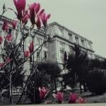 Forlanini: 75mila euro alla Spa per l'Agenzia fantasma